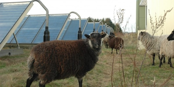 samso island microgrid wind solar biogas